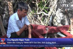 Thực hư chuyện xẻ núi và bê tông hóa đảo Soi Sim trên vịnh Hạ Long