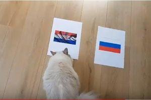 Tiên tri mèo dự đoán gieo nỗi lo cho chủ nhà Nga