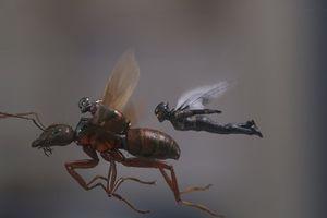 Ant-Man 2: Siêu anh hùng bình dân và quãng nghỉ giữa Infinity War