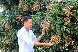 Cần Thơ xây dựng vùng cây ăn trái VietGAP