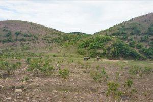 Dự án nuôi bò 4.500 tỉ ở Hà Tĩnh 'đổ bể': Trồng cỏ nuôi bò chỉ đạt năng suất 1/5 khi lập dự án