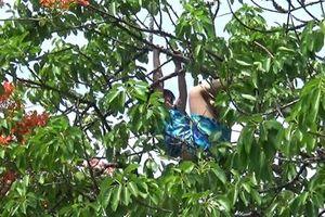 Giải cứu cô gái nghi ngáo đá leo ngọn cây nhảy nhót, la hét ở Hòn Chồng