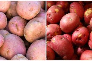 Chi tiết cách phân biệt khoai tây Trung Quốc 'đội lốt' Đà Lạt