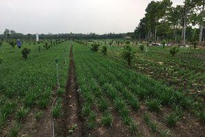 Đồng Nai: 8/10 đơn vị cấp huyện hoàn thành xây dựng nông thôn mới