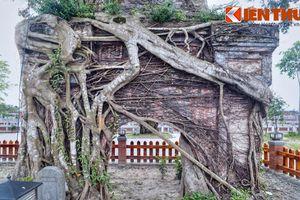 Ngắm cây si khủng mọc trùm cổng chùa cổ nhất miền Trung