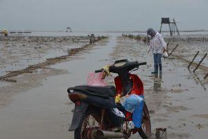 Buông lỏng quản lý bãi triều ở Quảng Ninh: Dân muốn bắt sá sùng phải 'nộp tô'