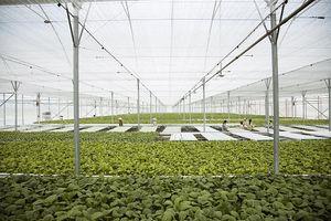 'Rộng cửa' phát triển nông nghiệp công nghệ cao?