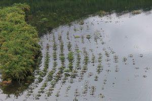 Đắk Nông: Phát huy mô hình trồng rừng bán ngập để tăng diện tích rừng