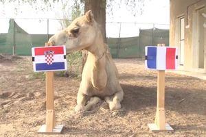 Linh vật dự đoán sốc trận chung kết World Cup Pháp - Croatia