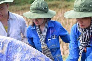 Lạng Sơn: Sinh viên giúp dân vét kênh mương, gặt lúa ngày mùa