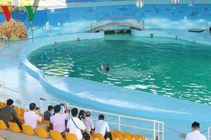 Hấp dẫn màn cá heo biểu diễn ở Hà Nội