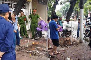 Truy tìm đối tượng cưa trộm sưa trong đêm ở Hà Nội