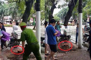 Nghi vấn cây sưa đỏ quý hiếm ở Hà Nội bị cưa trộm trong đêm
