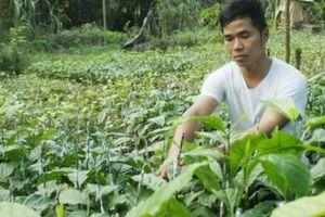 Làm giàu ở nông thôn: 9X ghép ngàn cây dổi đổi cả cây vàng