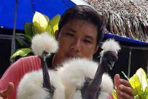 Loài gà có cổ như rắn 'hớp hồn' giới nhà giàu Việt Nam