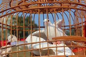 Khám phá 3 khu chợ chim cảnh hút khách ở Hà Nội
