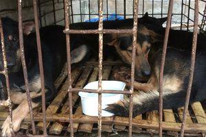 Quảng Trị: 2 người dùng xe biển số giả trộm 9 con chó bị bắt tại trận