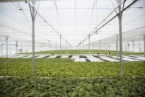 Nông nghiệp thông minh gắn với sản xuất an toàn