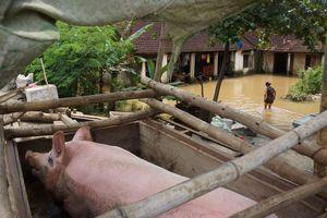 Dân rốn lũ chuyển bàn thờ lên nóc nhà, ăn ngủ trên đê