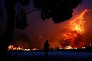 Khủng khiếp cháy rừng giữa thủ đô Hy Lạp, 120 người thương vong