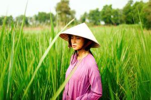 Hoãn chiếu 'Hai Phượng' của Ngô Thanh Vân tại Việt Nam