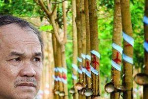 Vườn cao su HAGL của bầu Đức bị ngập sau vụ vỡ đập tại Lào