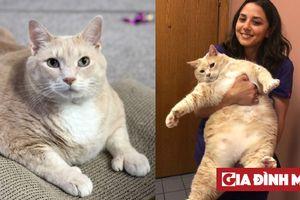 Chú mèo siêu béo nặng 15kg, được 'sen' vất vả giúp giảm cân mà chỉ thấy càng ngày càng ú
