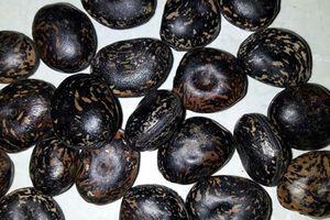 Vì sao hạt đậu Lào có giá 'trên trời' vẫn hút khách Việt?