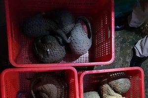 Giải cứu nhiều động vật quý hiếm trong quán ăn ở Đồng Nai