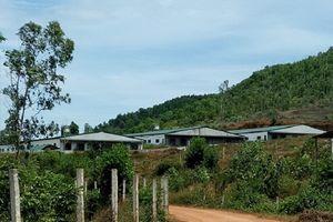 Thanh Chương (Nghệ An): Cần xử lý nghiêm trại lợn quy mô lớn xây 'chui' trên đất lâm nghiệp