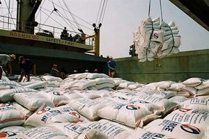 Xuất khẩu gạo cần cẩn trọng những tháng cuối năm