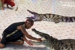 Kinh hoàng cảnh cá sấu ngoạm chặt tay nghệ sĩ xiếc