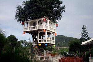 Mê mẩn những ngôi nhà cây đẹp nhất Việt Nam