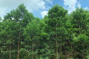 Lâm sản ngoài gỗ, nhân tố cho bảo tồn rừng tự nhiên