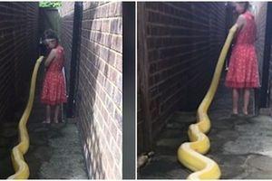 Rùng mình bé gái 5 tuổi chơi đùa với trăn dài gần 4 m