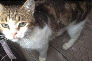 Nga: Phát hiện một chú mèo 'tuồn' ma túy vào nhà tù