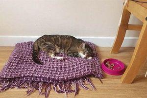Chú mèo đi lạc 13 năm tìm về nhà trút hơi thở cuối cùng
