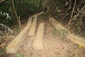 Truy trách nhiệm để xảy ra phá rừng qui mô lớn ở Vĩnh Thạnh