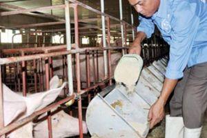 Giá heo hơi hôm nay 7/8: Công ty C.P tăng giá bán, giá lợn miền Bắc ngừng giảm?