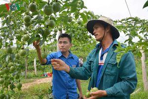 Làm giàu từ cây ăn quả ở vùng đất khó Cư Êlang