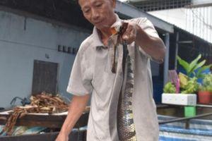 Làm bể lót bạt nuôi rắn ri tượng như nuôi lươn, bán 700 ngàn/ký
