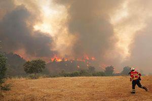 Nắng nóng kỷ lục, Châu Âu chìm trong khô hạn và cháy rừng