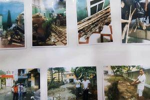 Công an Hà Nội bắt ổ nhóm chuyên chặt trộm gỗ sưa