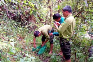 Quảng Nam: Thả một cá thể tê tê Java quý hiếm về rừng