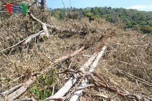 Công ty Lâm nghiệp Quảng Sơn để mất hơn 4.000 ha rừng trong vòng 7 năm
