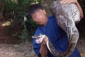 Bắt được trăn 'khủng' nuốt trọn con dê nặng 15kg của người dân