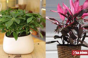 7 loại cây hút độc tố và bức xạ điện từ, trồng ngay trước khi bị ngạt thở tại chính nhà mình