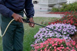 Công ty mẹ của Monsanto khẳng định thuốc diệt cỏ bị cáo buộc gây ung thư là 'an toàn'