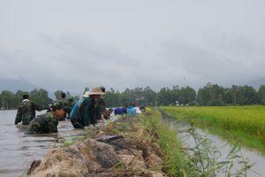 BĐBP An Giang giúp dân đắp đê ngăn lũ và thu hoạch hơn 20 ha lúa