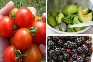 Muốn làm chậm lão hóa da hiệu quả mà ít tốn kém, hãy ăn 10 loại thực phẩm giàu collagen này thường xuyên